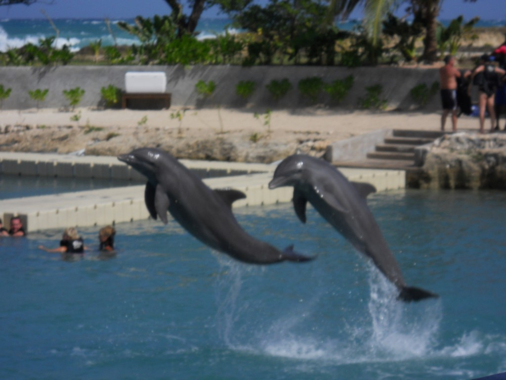 Dolphin Cove Lucea