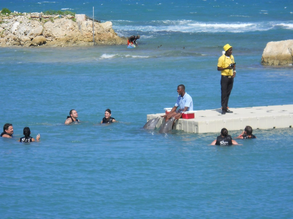 Dolphin Cove in Negril